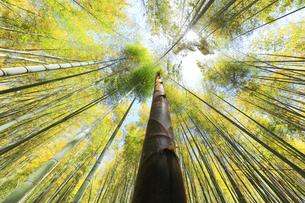 竹林に竹の子と空に太陽の写真素材 [FYI04317918]