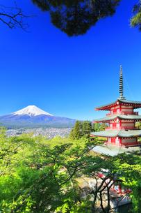 新倉山浅間公園より五重塔に新緑と雪の富士山の写真素材 [FYI04317931]