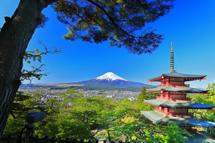 新倉山浅間公園より五重塔に松の木と雪の富士山の写真素材 [FYI04317935]