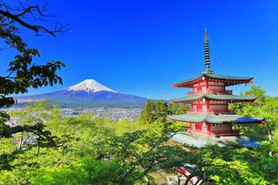 新倉山浅間公園より五重塔に新緑と雪の富士山の写真素材 [FYI04317938]