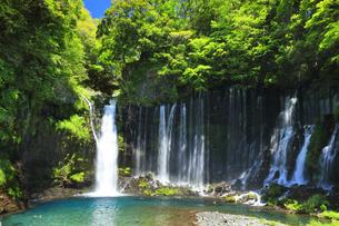 新緑と白糸の滝にカモの写真素材 [FYI04317991]