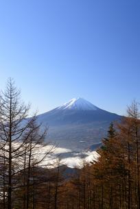 山梨県 木々の隙間から覗く富士山の写真素材 [FYI04318176]