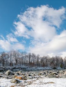 おもしろい雲と空と木々のイメージ素材の写真素材 [FYI04318324]