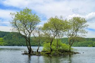 桧原湖の小島の写真素材 [FYI04318552]