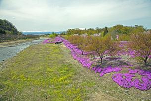 春景の写真素材 [FYI04318597]