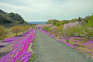 春景の写真素材 [FYI04318598]