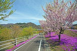 春景の写真素材 [FYI04318599]