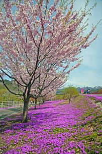春景の写真素材 [FYI04318600]