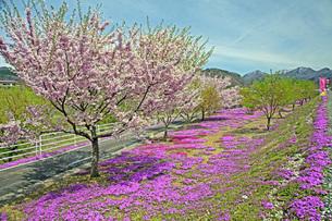 春景の写真素材 [FYI04318601]