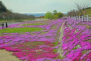 春景の写真素材 [FYI04318602]