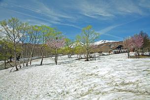 残雪の月山の写真素材 [FYI04318654]