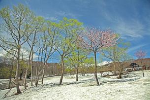 残雪の月山の写真素材 [FYI04318656]