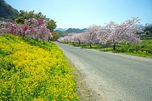 春景の写真素材 [FYI04318660]