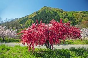 春景の写真素材 [FYI04318661]