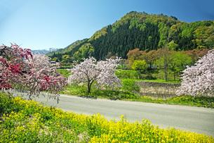 春景の写真素材 [FYI04318662]