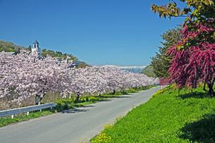 春景の写真素材 [FYI04318665]