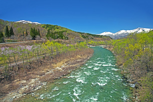 新緑の寒河江川の写真素材 [FYI04318676]