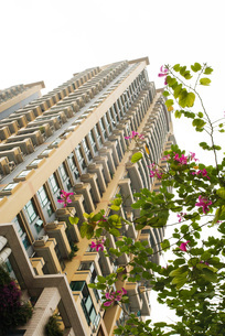 high rise and tree in blossomの写真素材 [FYI04319583]