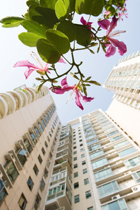 high rise and flowering branchの写真素材 [FYI04319627]