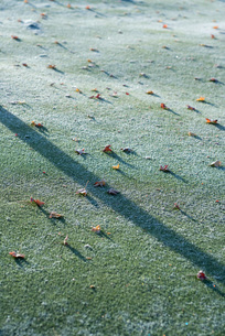 Frost-covered grassの写真素材 [FYI04319678]
