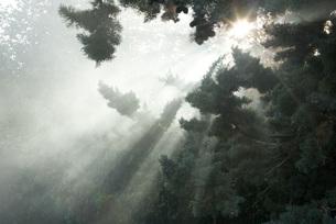 Beams of sunlight coming through treeの写真素材 [FYI04319697]