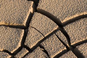Cracked dry soil, full frameの写真素材 [FYI04319734]
