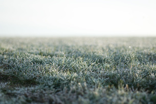 Frost-covered grass, surface level viewの写真素材 [FYI04319735]