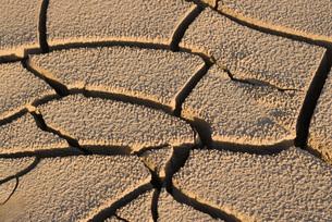 Cracked dry soil, full frameの写真素材 [FYI04319736]