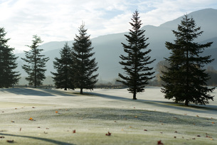 Frost-covered golf course in mountainsの写真素材 [FYI04319739]