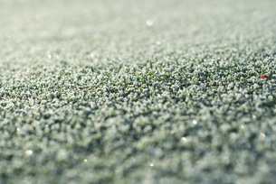 Frost-covered grassの写真素材 [FYI04319744]