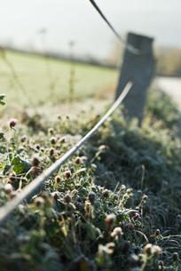 Rural fenceの写真素材 [FYI04319751]