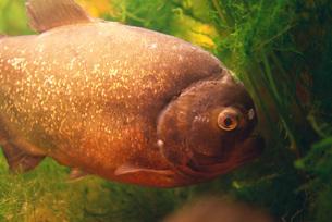 Fish in aquariumの写真素材 [FYI04319765]