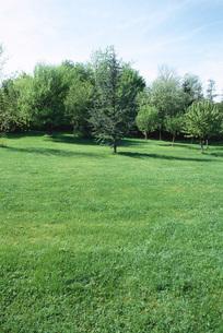 Trees in yardの写真素材 [FYI04319768]