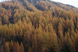 Trees on hillside with autumnal foliageの写真素材 [FYI04319774]
