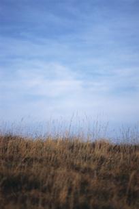 Tall dry grass on hillsideの写真素材 [FYI04319793]