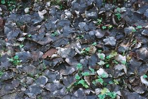 Wet dead leaves on groundの写真素材 [FYI04319831]