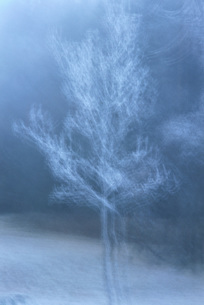 Tree, long exposureの写真素材 [FYI04319852]