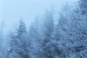 Snow-covered treesの写真素材 [FYI04319853]