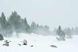 Snow-covered landscapeの写真素材 [FYI04319877]