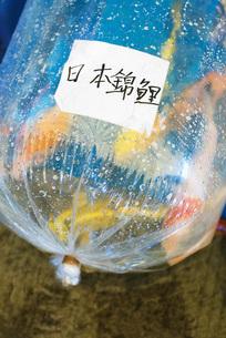 Label on bag full of goldfishの写真素材 [FYI04319924]