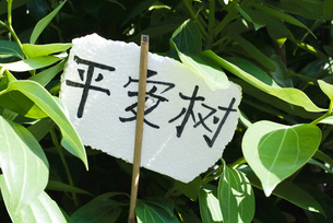 Label on plant in Chinese charactersの写真素材 [FYI04319925]