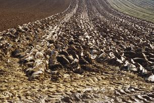 Plowed fieldの写真素材 [FYI04319991]