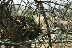 Nest in treeの写真素材 [FYI04320012]