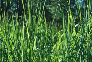 Grassの写真素材 [FYI04320015]