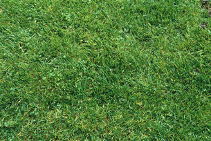 Green lawn, full frameの写真素材 [FYI04320018]