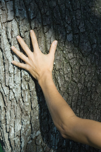 Woman touching tree trunk, croppedの写真素材 [FYI04320066]