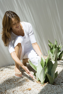 Woman crouching to touch snake plantの写真素材 [FYI04320070]