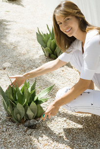 Woman crouching to touch snake plantの写真素材 [FYI04320072]