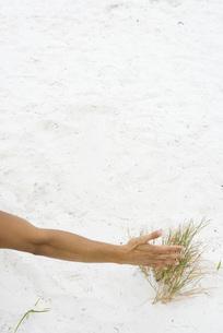Man touching dune grass of armの写真素材 [FYI04320108]
