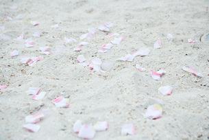 Flower petals scattered on sandの写真素材 [FYI04320211]